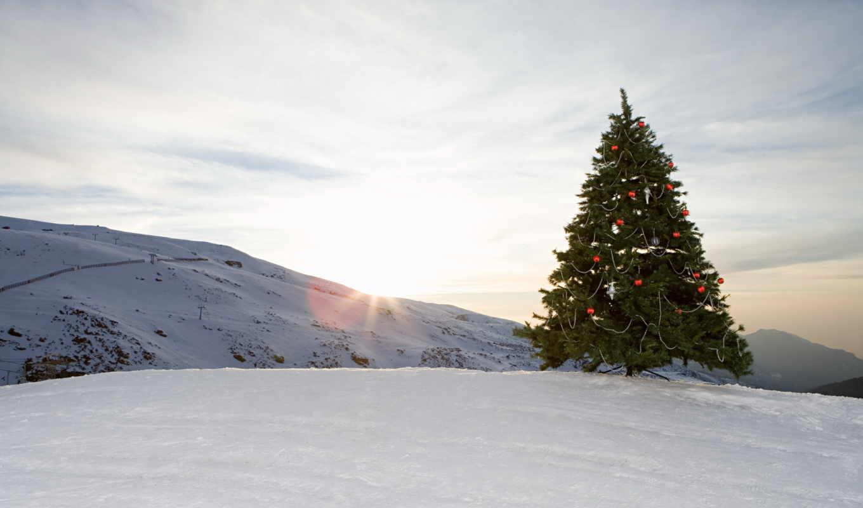снег, елка, zima, шары, игрушки, эль,
