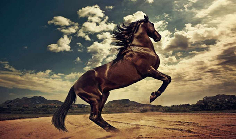 horses, лошадь, caballos, black,, caballo, images, tatuajes,