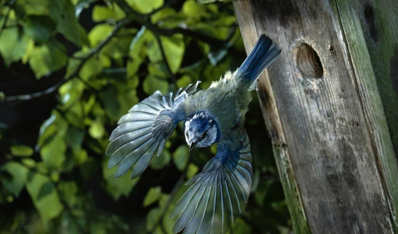 птицы, птица, животные, полет, крылья, птиц,