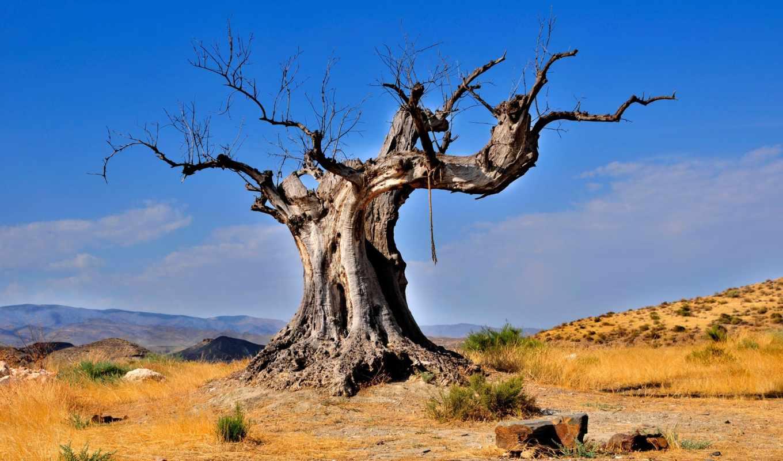 дерево, пустыня, мертвое, сухое, природа,
