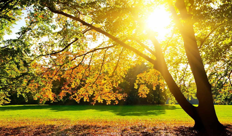 sun, светит, ярко, сквозь, ветки, разрешениях, под, разных,
