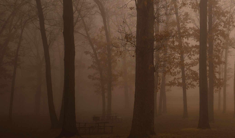 темнота, лес, деревья, туман, дымка, отдых, свежесть, утро, свобода, скамейки, красота,