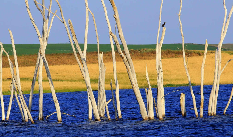 природа, картинкой, страница, птица, subject, марта, можно, фотографии, high, установить,