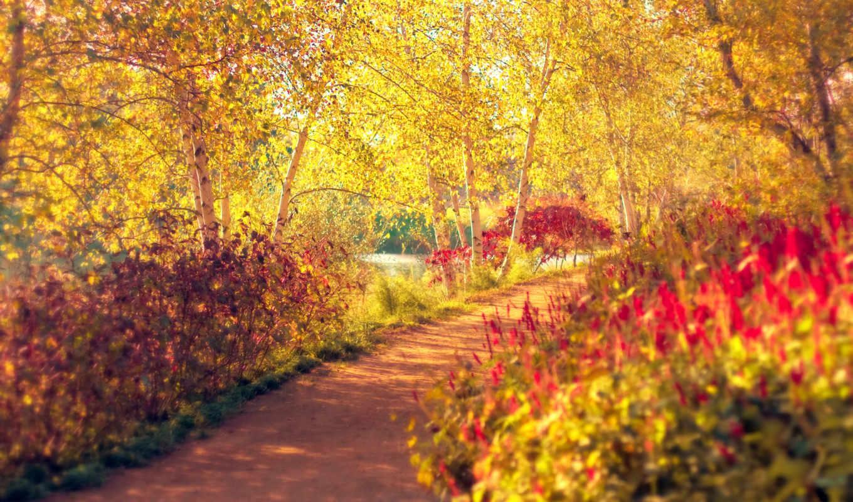 park, osen, деревя,