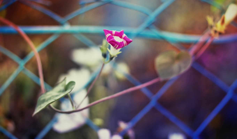 цветы, розовые, осень, withered, school,