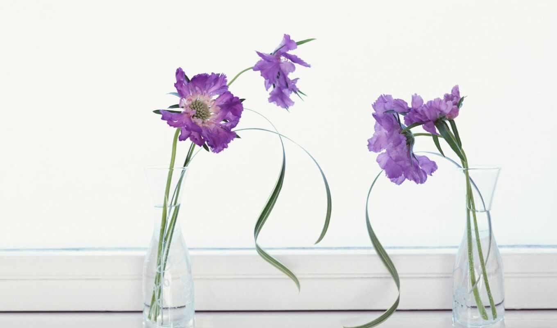 цветы, вазы, цветами, ваза, pair, тюльпаны, цветов, вазе,