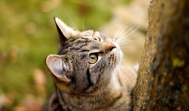 кошки, zhivotnye, самая, коллекция, качественная, everything, коты, форматы, большая,