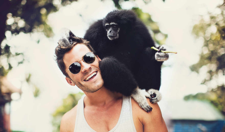 обезьяна, плече,