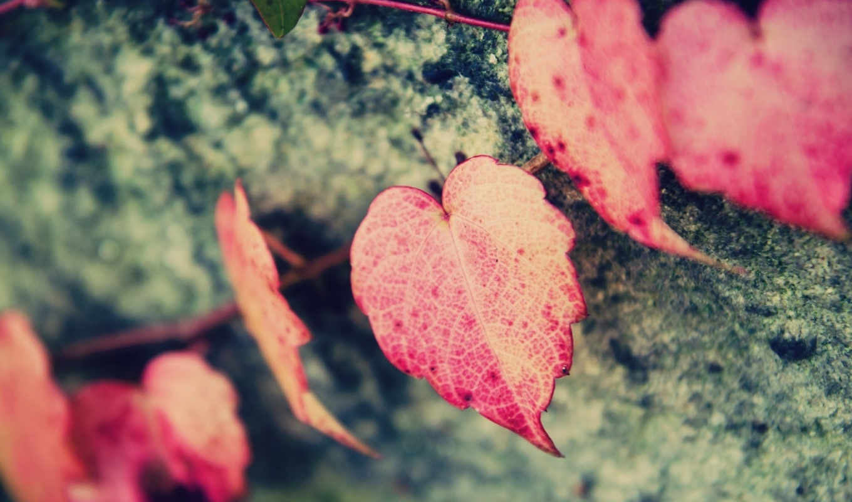 листочки, макро, сердце,