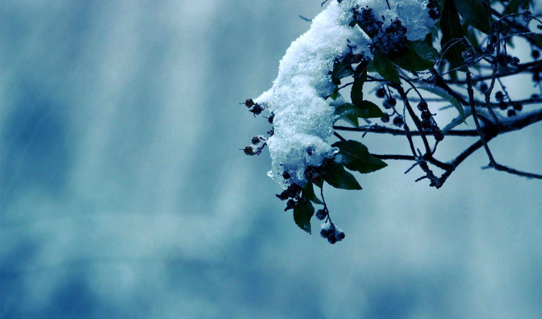 природа, холод, деревья, зима, мороз, снег, дерево, картинка, картинку,