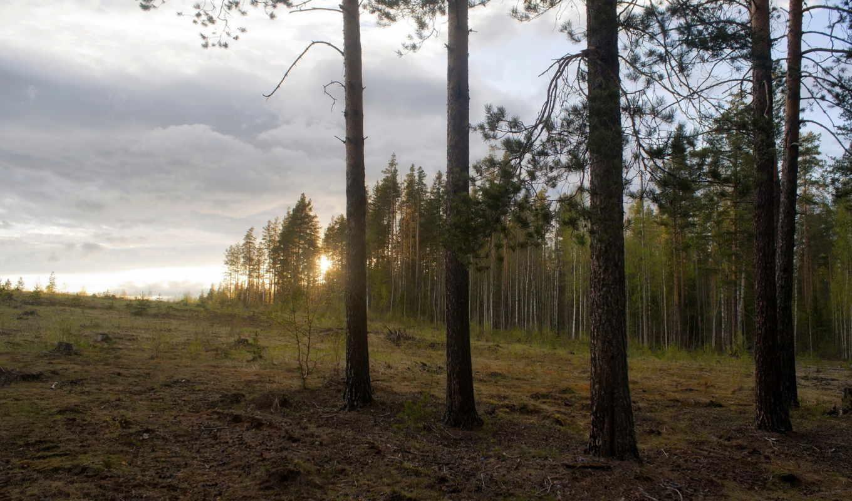 закат, природа, лес, пейзаж, смотрите,