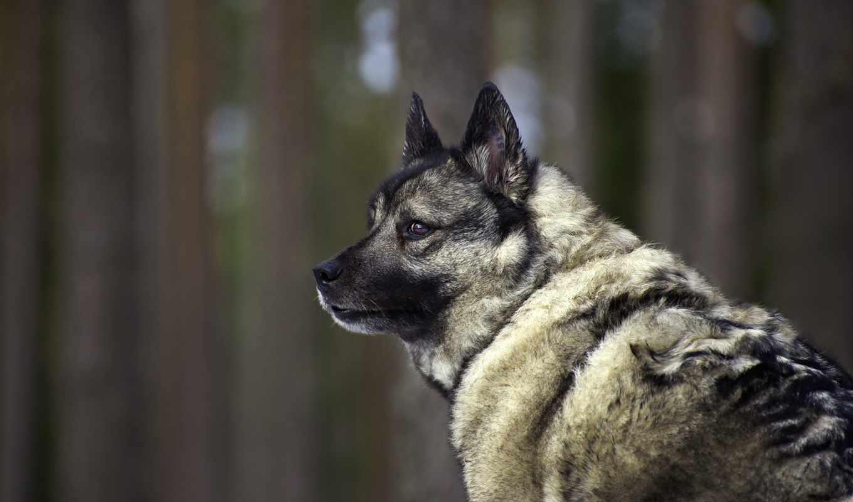 собака, взгляд, друг, похожие,