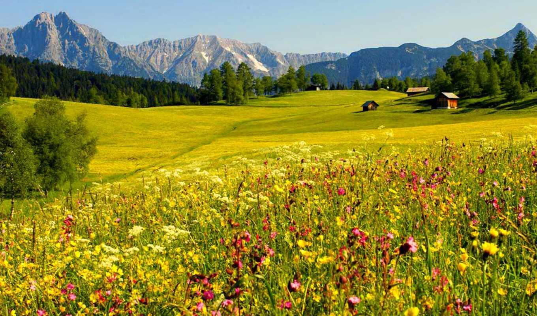 пейзажи, горы, поле, обоях, seefeld, summer, landscape,