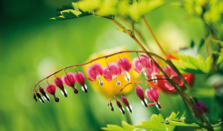 подробнее, цветы, цветов, розы, possible, разрешений,