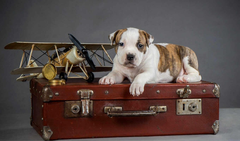 собака, dogs, images, animal, spot, фон, mobile, собаки,