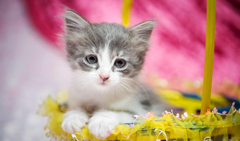 ,кот, котенок, корзинка, детеныш