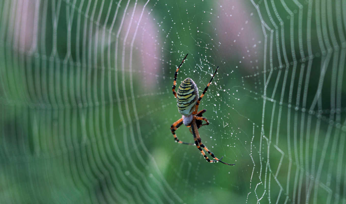 spider, web, pantalla, download, desktop,