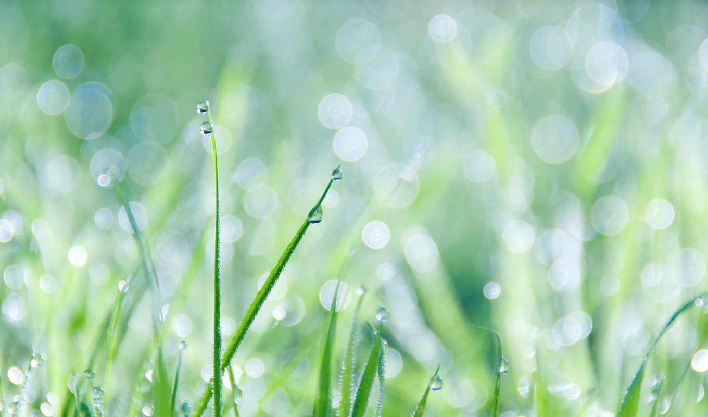 grass, dew, free, drops, download,