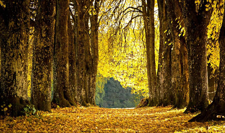 priroda, аллея, времена, деревя, года, osen, zima,