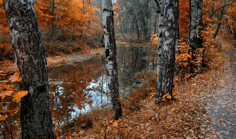 осень, березы, природа, листья, флот, пруд, листопад,