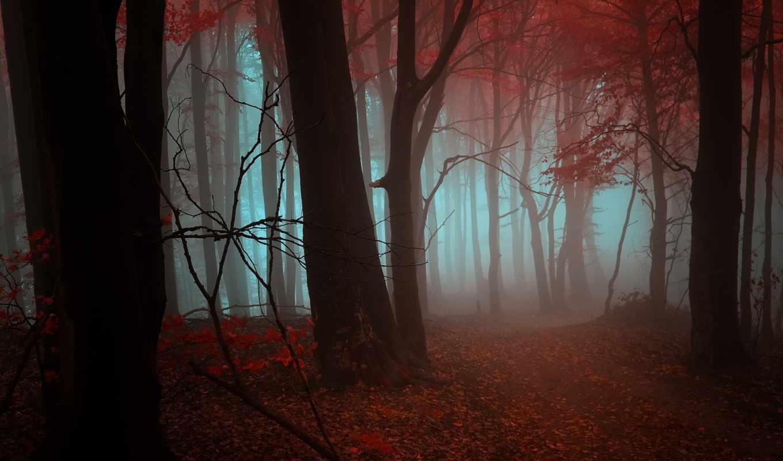 лес, листья, осень,