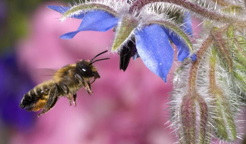 пчелы, цветы, пчелка, цветов,