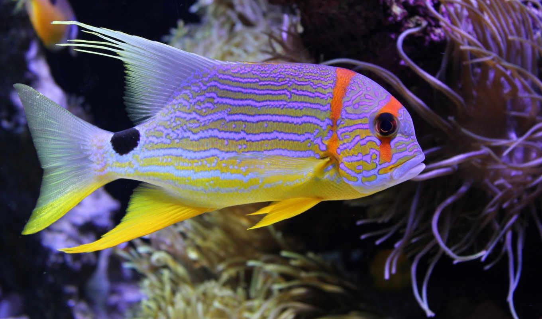 pisces, underwater, zhivotnye, world, zoom, кораллы, fish, животных,