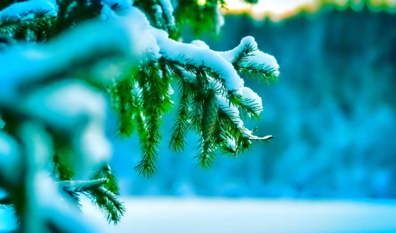 winter, природа, снег, елка, игла, макро, веточка, холод