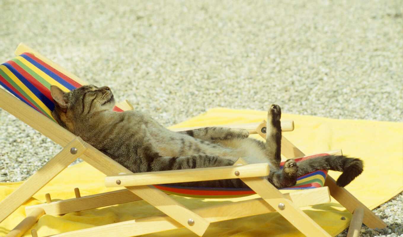 кот, загорать, пляж, тюлень, funny, folding, шезлонг