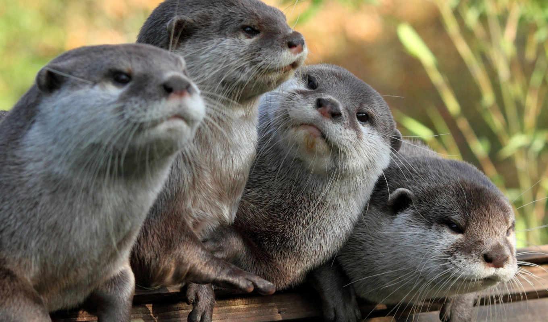 otter, морская, выдры, калан, выдру,