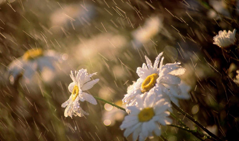 погода, будет, дождь, под, днем, штормовое, предупреждение, прогноз, год, ngày, слфлны, für, мно, мщ, лмйн, аоь,