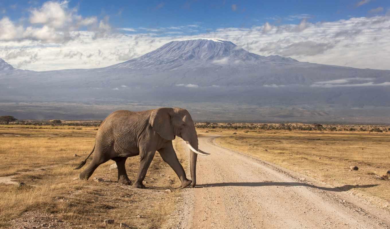 kilimanjaro, килиманджаро, со, февр, national, флот,
