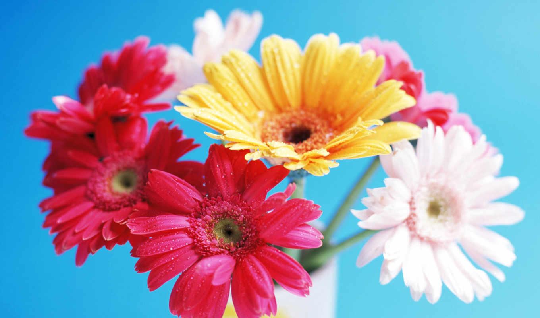 герберы, марта, цветы, просмотров, праздники, форматы, felsefesi, heyat, июня,