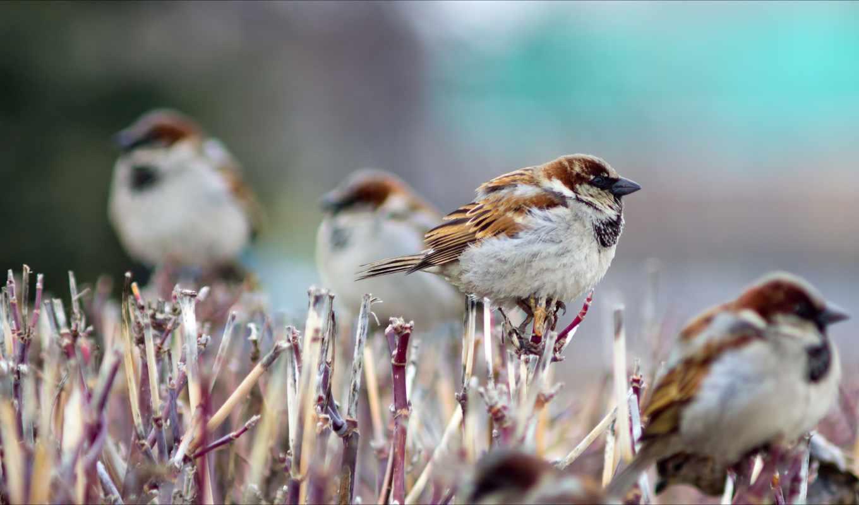птицы, воробьи, winter,
