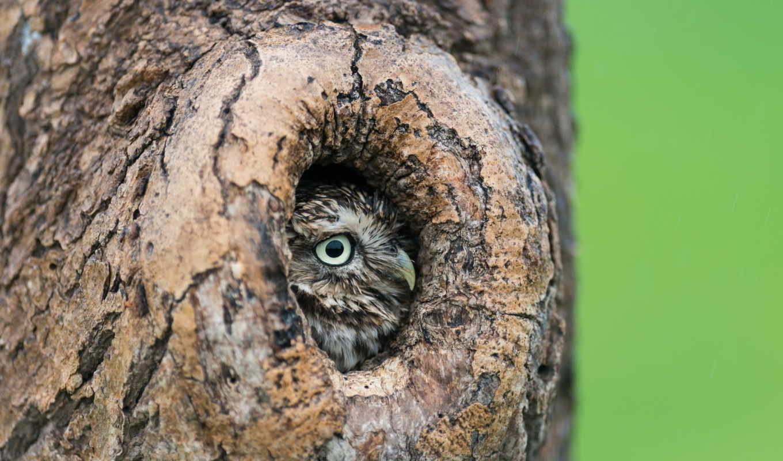 ложбинка, сова, дерево, птица,