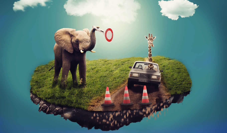 elephants, слон, cars, colorful, выгул, free,