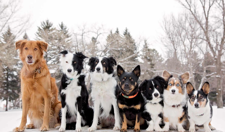 друзья, собаки, things,