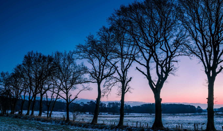 winter, норвегия, деревья, поле, иней, поляна, утро, снег,