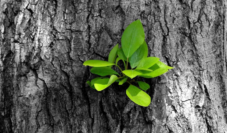 росток, лес, зелёный, красивые, дерево, сосны, овраг, мох, чаща,