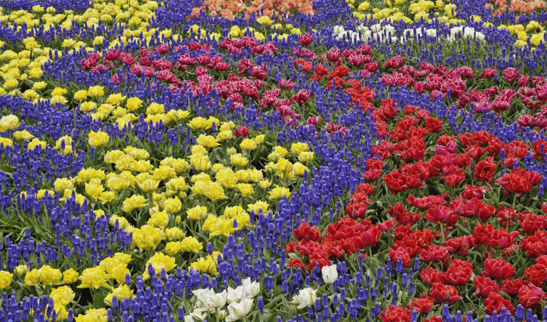 campo, flores, fondos, colores, pantalla, escritor
