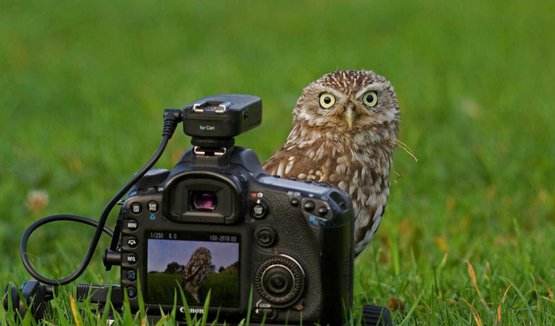 сова, фотоаппарат, трава,