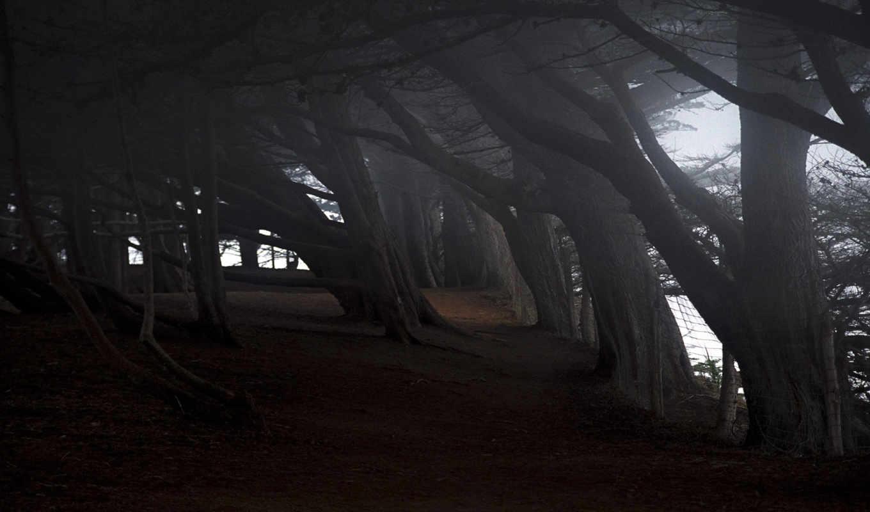 природа, наклон, деревья, iphone, лес, забор, разрешением, тропинка,