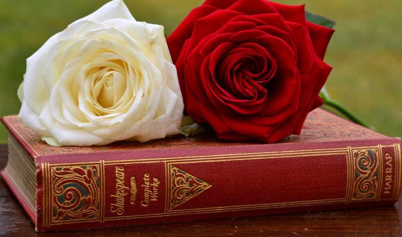 розы, cvety, фэнтези, roza, книга, картинку, makro, белая,