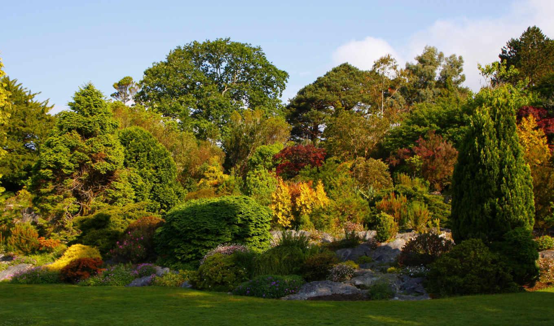 сады, ireland, природа, пруд, кусты, muckross,