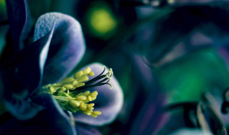 лепестки, весна, цветы, flowers, телефон, blue,