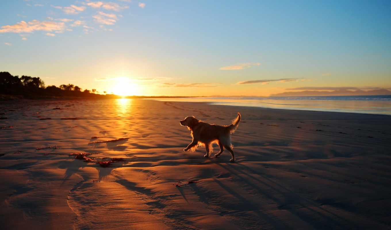 море, собака, закат, landscape, друг, пляж, собаки,