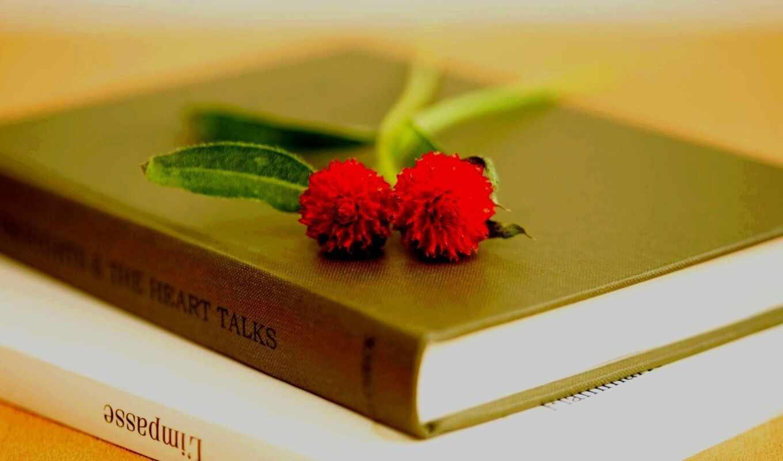 книга, цветы, книги, макро, лепестки,