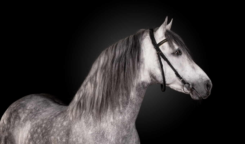 admin, портрет, река, cavallo, тихая, лошадь, ди,