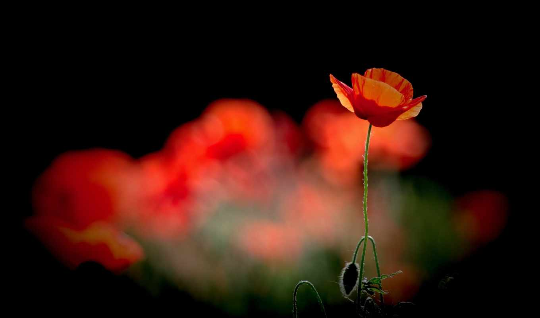 цветы, you, можно, covers, facebook, flowers,