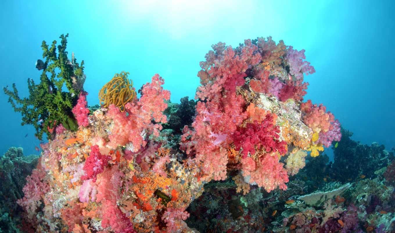 world, underwater, рыбки, кораллы, море, водой, под, pisces, water, fish, xperia,